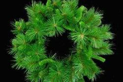 Wreath Mixed Pine  24""