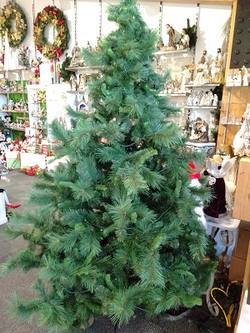Mixed Pine 2.1m / 7ft   Tree