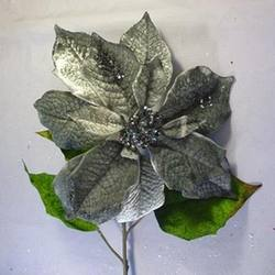 Platinum Poinsettia